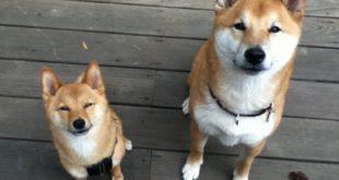 Die Dogecoin Gemeinde