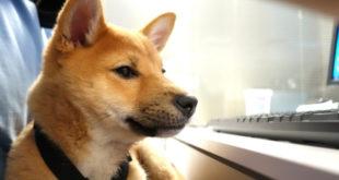 Mehr über Dogecoin erfahren