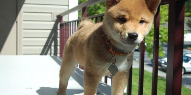 Die Community hinter Dogecoin