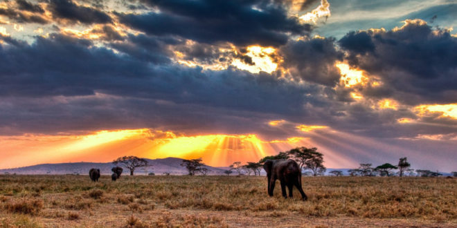 serengeti - Bitpesa Tansania Bitcoin Zahlungen