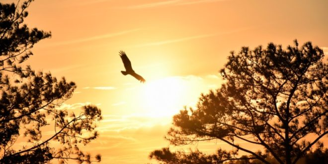 Rekordhoch: Ether-Kurs auf Höhenflug