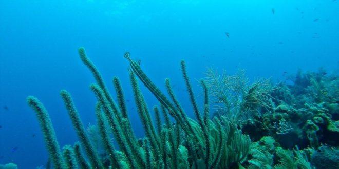 Projekt Coral Reef: Alben mit Monero kaufen