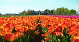 Niederländischer Finanzminister fordert neue Gesetze für ICOs
