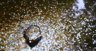Koreanische Börse Bithumb besitzt beinah 6 Milliarden Dollar in Kryptowährungen