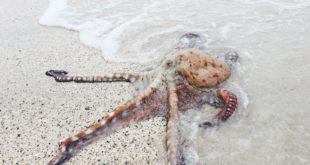 Kraken zieht sich vom japanischen Markt zurück